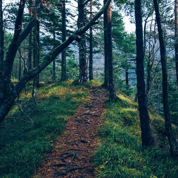 Ścieżki spacerowe