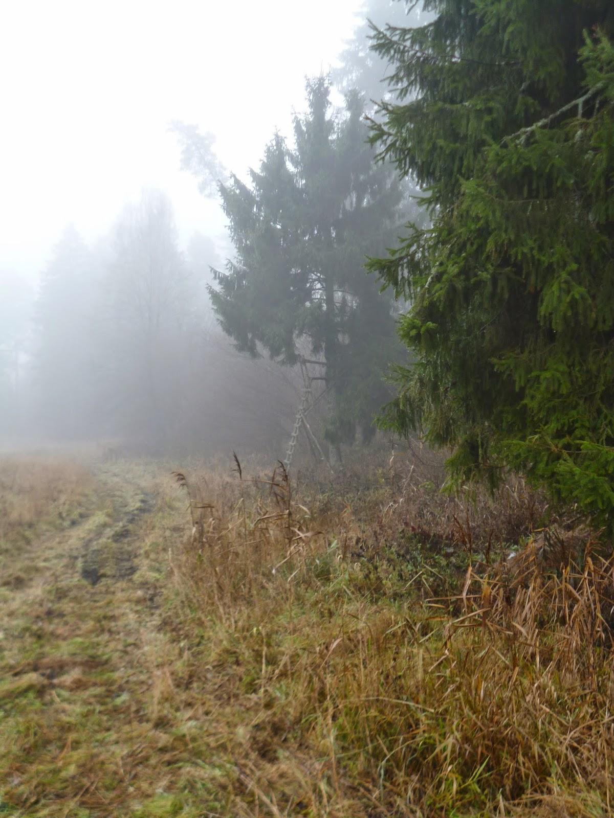 bagna mgły horrory