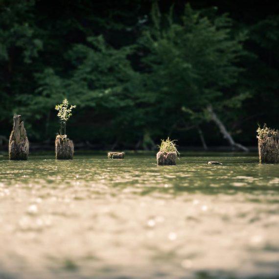 rzeka Krutyń | Gościniec Szuwary w Krutyni