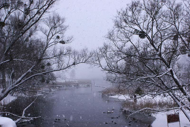rzeka Krutyń | w Szuwarach jest Bajkowo