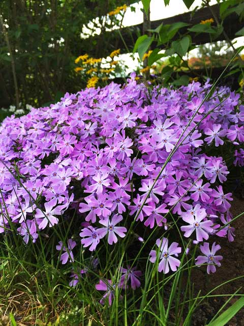 Un Jardin czyli mój tajemniczy ogród