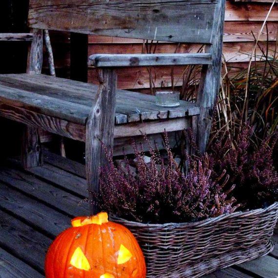 halloween w Szuwarach