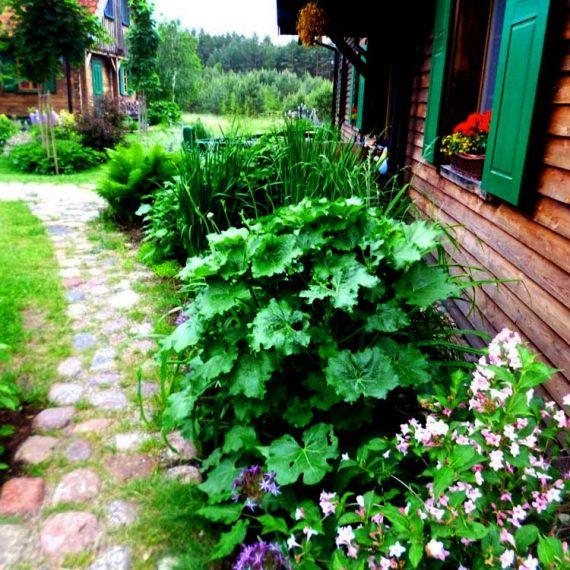 ogród w Szuwarach