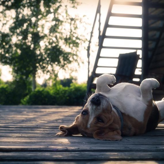 relaks | Gościniec Szuwary w Krutyni